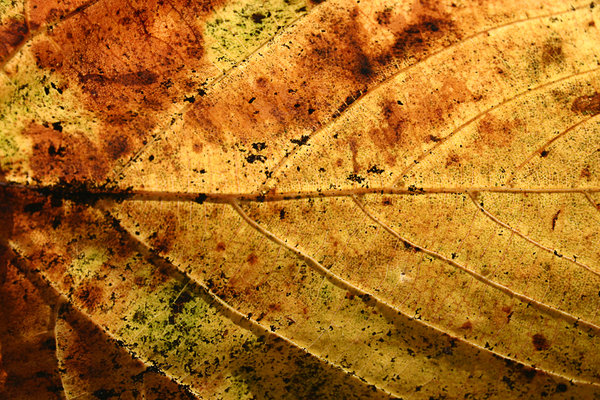 Autumn Colours: Another leaf texture :) Sorry!