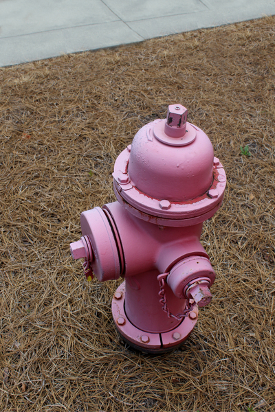 fire hydrant: a pink fire hydrant