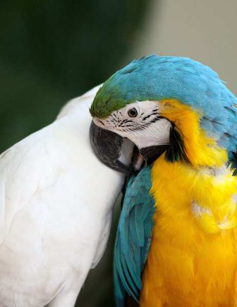 Colourful Bird 6: Snapshots of a parrot and a cockatoo at a bird park
