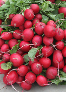 Fresh Radishes: Radishes found in a farmers market.