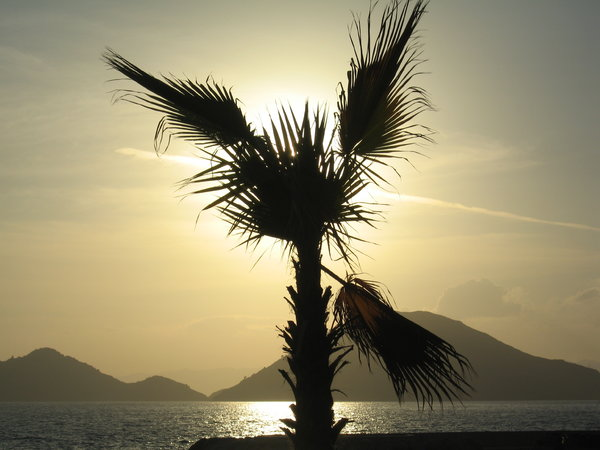 Palm tree in the setting sun: sunset in Turkey