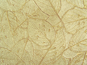 leafy wallpaper texture on a w: A wal that has been texturised with leaf imprints