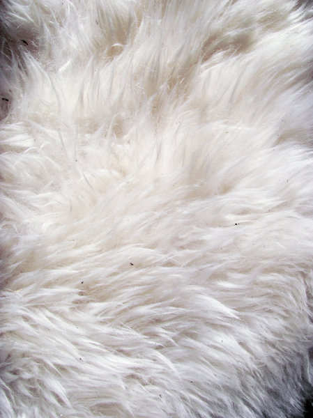 Sheep skin texture 4: sheep hair closeup
