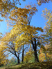 autumn collection: a few shots of trees in autumn colors:birch, oak, spruce, larch and other
