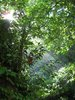 Tropic Forest: Morning sun in a tropic forest
