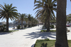 Palm tree piazza: Palm trees in a piazza and promenade in a coastal town in Puglia, Italy.