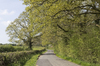 Rural road in spring: A rural road in West Sussex, England, in spring.