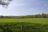 Green meadow: Fresh vividly green grass in a meadow in West Sussex, England, in spring.