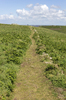 Countryside footpath: A footpath on Skomer Island, Pembrokeshire, Wales.