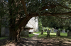 Yew tree churchyard: A parish churchyard with ancient yew (Taxus) trees in West Sussex, England.