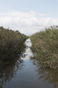 Waterway: A waterway on a nature reserve in Majorca, Balearic Islands, Spain.