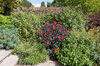Autumn flower border: A border of perennial flowers in autumn in a garden in Kent, England.