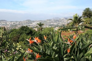 Gardens and city: Funchal, capital city of Madeira, as seen from a terraced hillside garden.