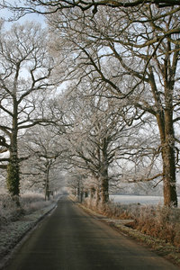 Frosty lane: A tree-lined country lane after a heavy overnight frost in West Sussex, England.
