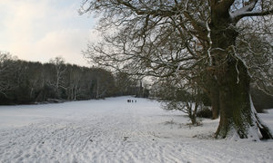Walking in the park: Walking amid freshly fallen snow in a park in West Sussex, England.