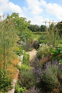 Herb garden: An overgrown herb garden in East Sussex, England.