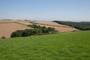 Hilly fields: Crop fields on the South Downs, West Sussex, England in summer.