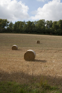 Hay bales: Bales of hay in a harvested wheat field in Hampshire, England.