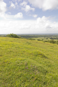 Downland: Chalk downland with wild thyme and other plants on the South Downs, Sussex, England.