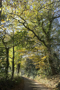 Autumn lane: A country lane in Sussex, England, in autumn.