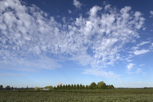 Agricultural landscape: Sky and orchards on the USA/Canada border.