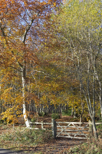 Forest gate: Gateway to a forest in West Sussex, England, in autumn.