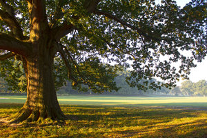 Autumn park: Dawn light in a park in early autumn.