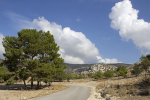 Cyprus mountain road 1: A road through the dry coniferous mountains of Cyprus.