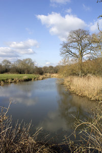 River in early spring: A small river in West Sussex, England, in late February.
