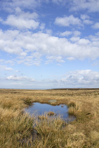 Moorland pool: A pool on a moor in northern England.