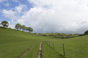 Green meadow: A green meadow on the South Downs, East Sussex, England, in spring.