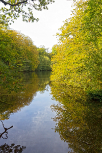 Woodland pool: A woodland pool in West Sussex, England, in early autumn.