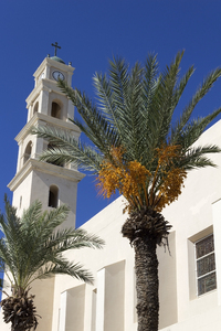 Jaffa, Israel: A church with palm trees in Jaffa (= Joppa), Israel.