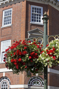 Hanging baskets: Hanging flower baskets in a town in England.