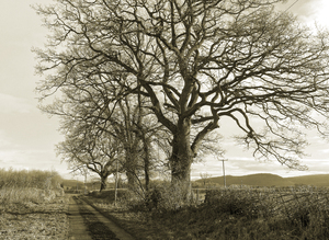 Winter lane - sepia: A rural lane in Wales in winter.