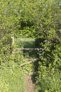 Overgrown rural stile: An overgrown rural stile in West Sussex, England, in early summer.