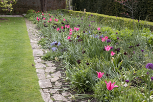 Tulip border: Tulips and other bulbs in a garden border at Tintinhull, Somerset, England. Photography in the grounds of this National Trust property is freely permitted.