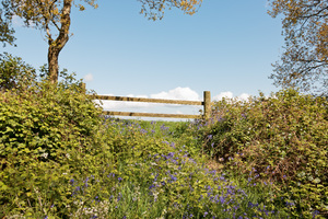 Farm gate with spring flowers: A farm gate and verge of wild flowers (mainly bluebells) in Dorset, England, in spring.