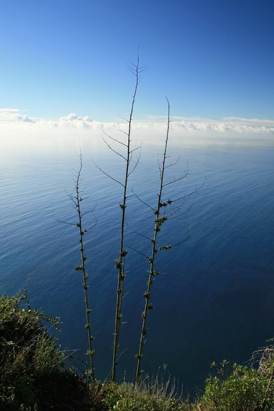 Cliff edge: View of the Atlantic Ocean from a high cliff on the southern coast of Madeira.