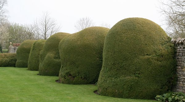 Abstract topiary: Abstract