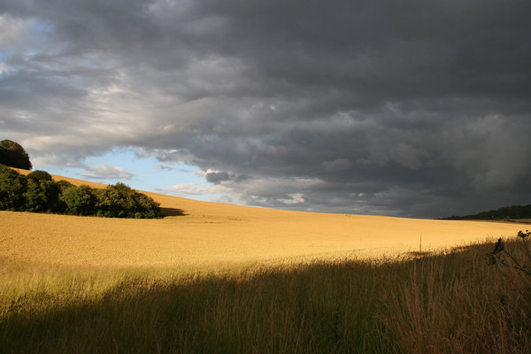 Summer storm: An approaching summer storm over a wheat field in Hampshire, England.