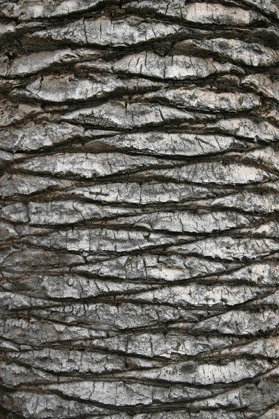 Palm tree texture: Bark of a large palm tree in Sardinia.