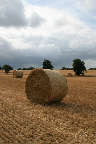 Hay rolls: Hay rolls in a field in West Sussex, England.