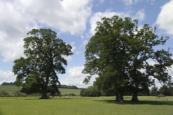English parkland: Parkland in Wiltshire, England, in early summer.