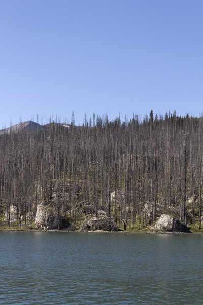 Remains of a forest fire: The remains of a forest fire beside a lake in Canada.