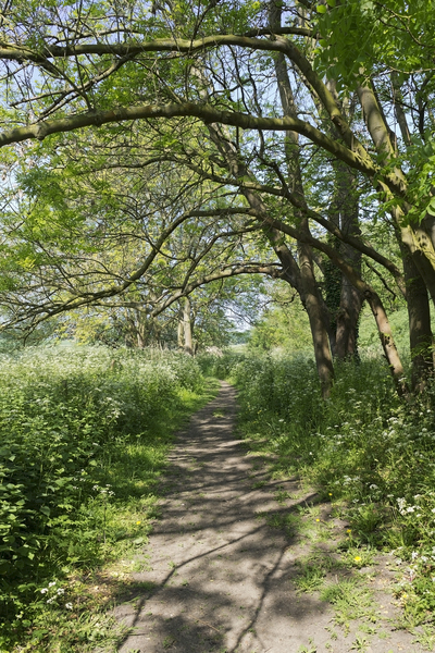 Country walk: A rural footpath in Bedfordshire, England, in spring.