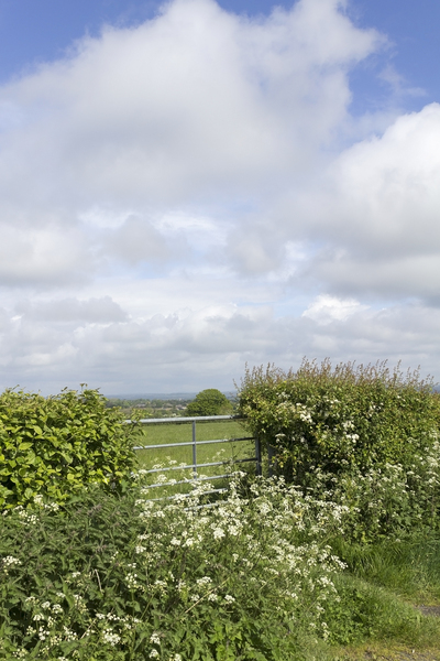 Field gate: Gate to a farmer's field in East Sussex, England, in spring.