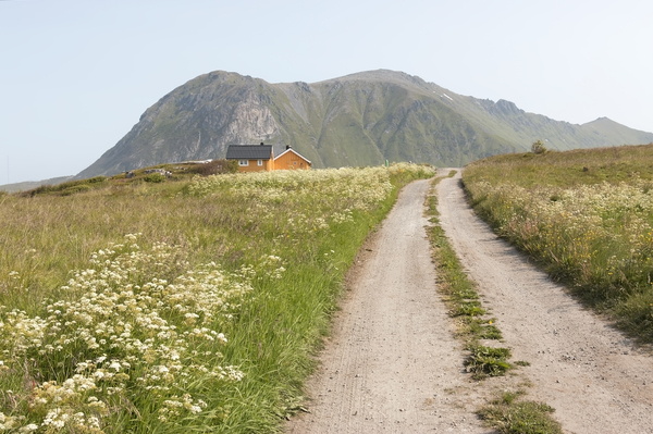 Rural houses: A lane leading to rural houses on the Lofoten Islands, Norway.