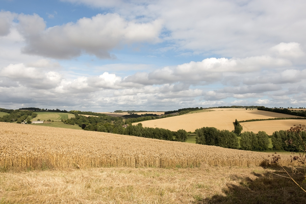 Summer landscape: View from Hod Hill, Dorset, England.