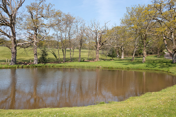Pond in spring | Free stock photos - Rgbstock - Free stock images |  micromoth | April - 20 - 2019 (0)